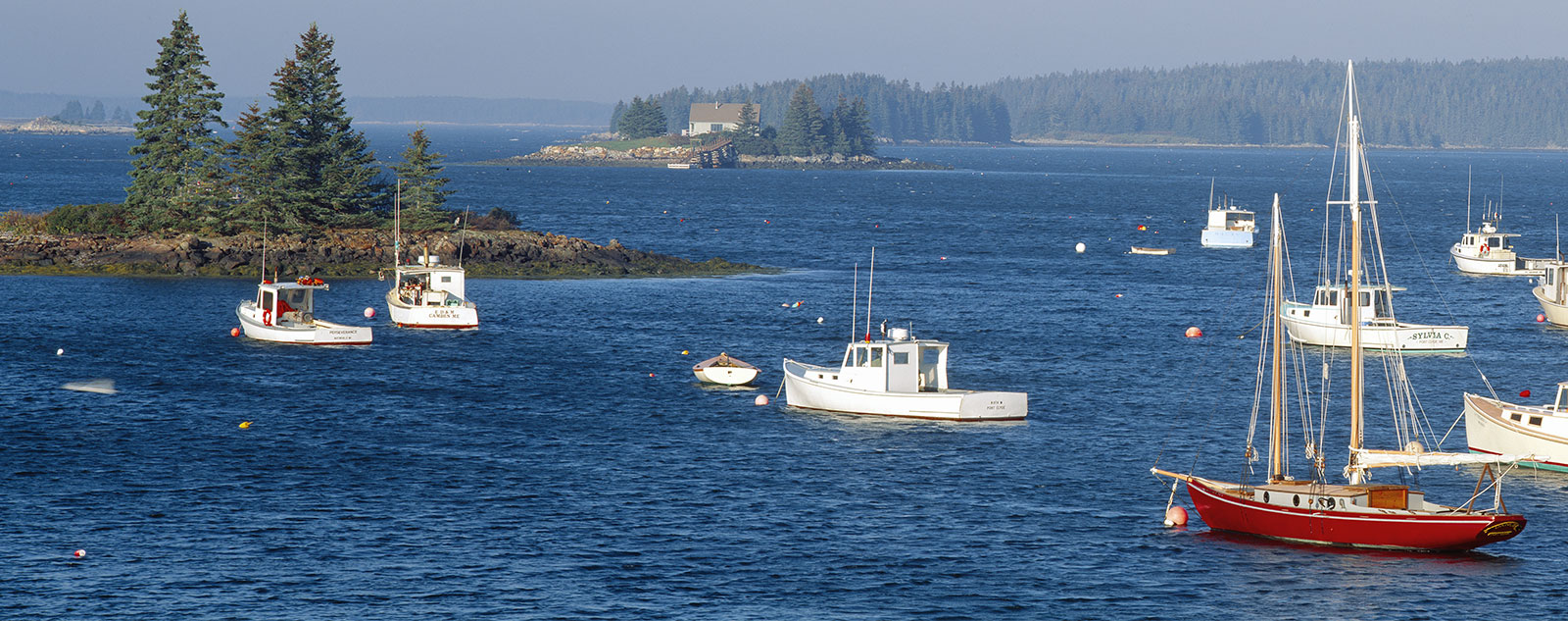 Maine's long lobster fishing season affecting scallop prices